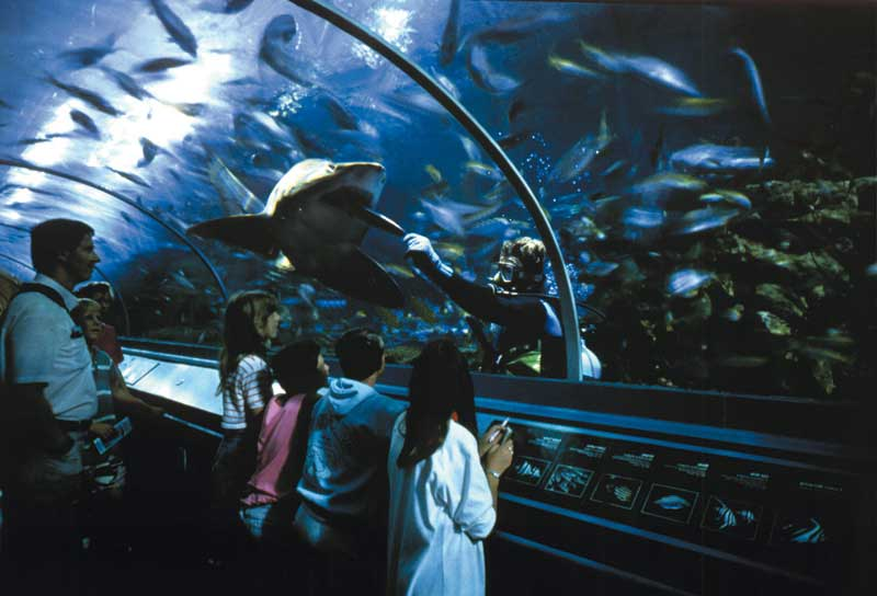 BANG YOUNG JAE + @iab_yj  - Page 6 Australie-sydney-aquarium-visitors_watch_hand_feeding_grey_nurse