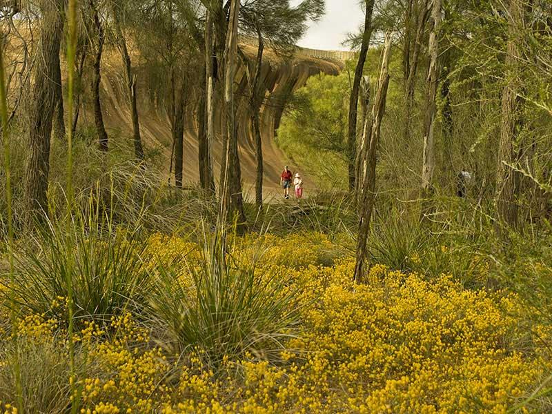 Nature et histoire aborigne aux alentours de wave rock excursion australie western australia nature et histoire aborigne aux alentours de wave rock tourism publicscrutiny Images